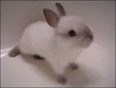 bunnies_03.jpg