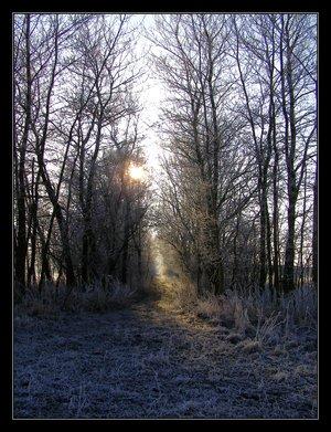 to_find_the_winter_fairies_by_wilhelmine