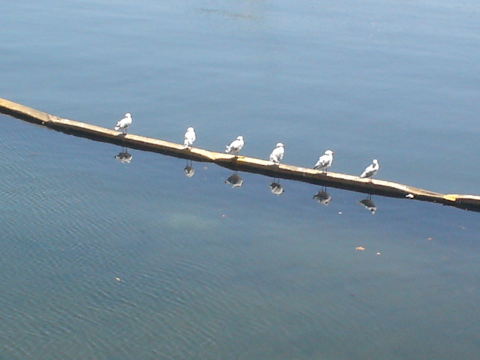 five-seagulls1