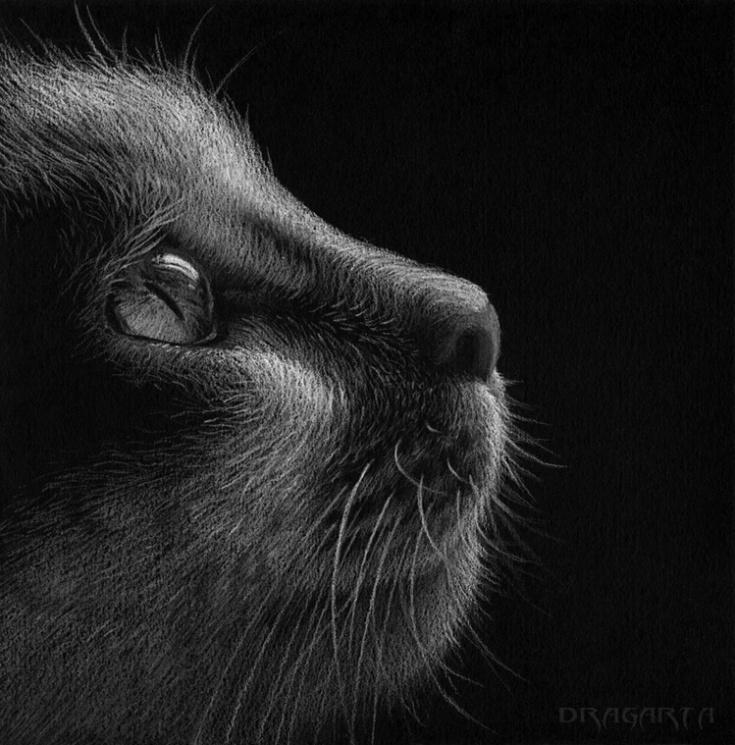 Cat_by_Dragarta