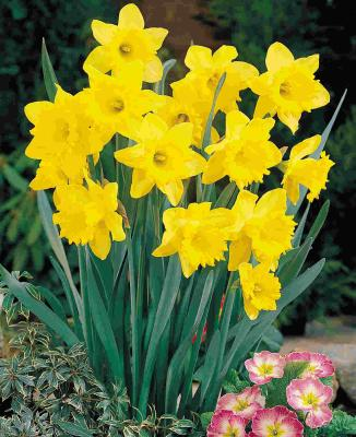 http://selmainthecity.files.wordpress.com/2009/08/feeding-spring-daffodils-hyacinths-and-crocus-14911.jpg