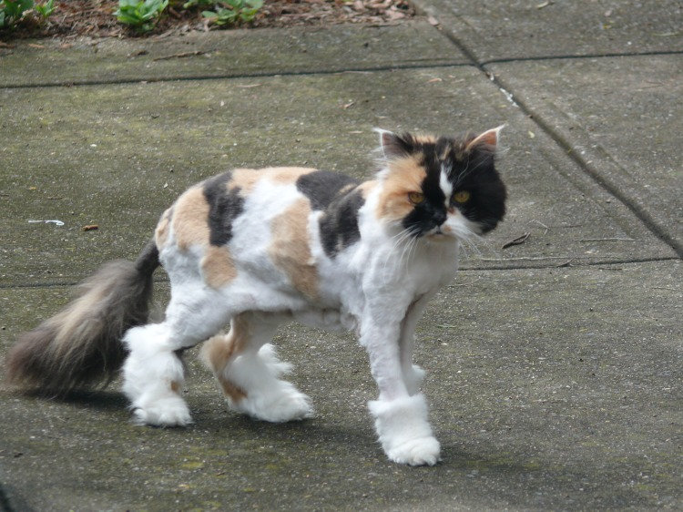 Image result for boots the cat pictures